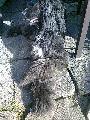 pejsek v útulku - obrázek