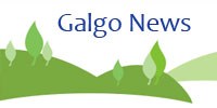 Galgo News