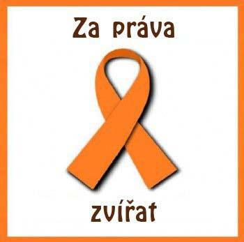 Česká verzeobrázek 2235