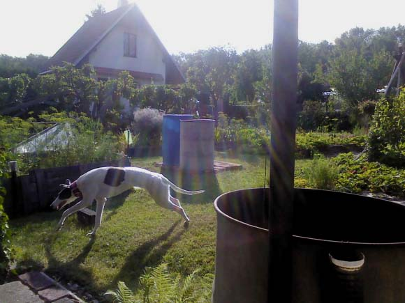 Zuzanka na zahradě