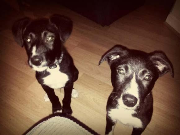 Freddie a Ollie