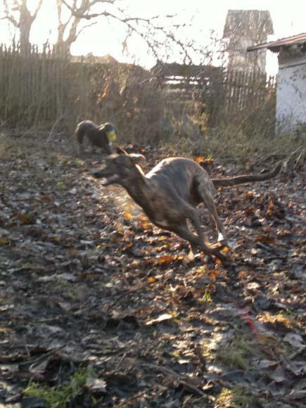 behanie v záhrade. jeseň 2011