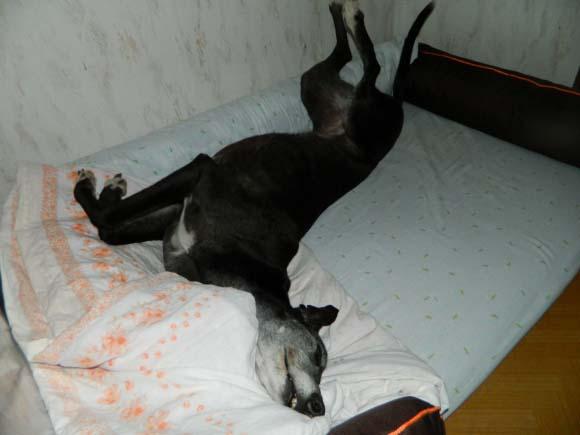 Relax po véče :))))obrázek 4023