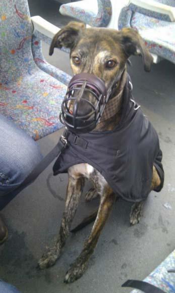 Sven cestuje vlakem...
