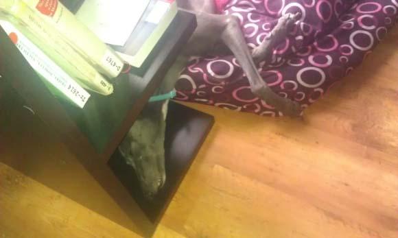 Spí v poličce