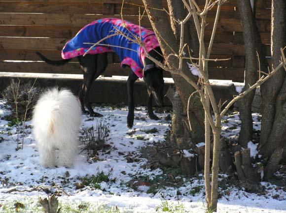 Zima na zahraděobrázek 6815