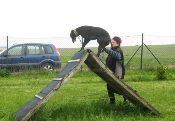 psí školička BaF v Kovalovicíchobrázek 6815