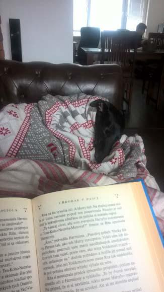 Dobry pes a dobra knihaobrázek 6943