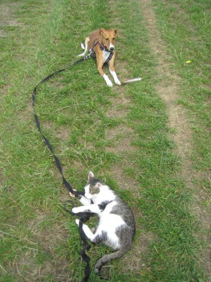 Flori a učeníčko s domácí kočičkou i venku