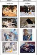 Rozdíl mezi perrerou a protectorouobrázek 2235
