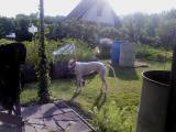 Doník na zahradě
