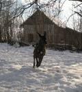 behanie v záhrade. Zima 2011/2012