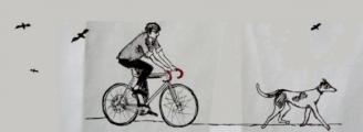 bez vodítka a vedle kola bohužel běhá jen na papířobrázek 4213