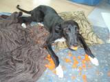 ..miluje molitanové hračky...asi tak deset minut..
