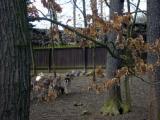 Lesní zoo