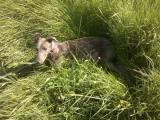 poleženíčko v trávě