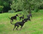 Na zahradě s kámošema - malé běhání