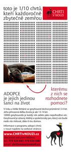 Adopce chrtů vnouzi - letáček
