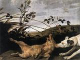 Greyhound catching a young wild-(Frans Snyders)